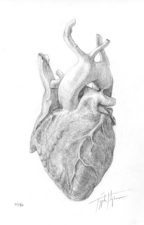 cadaver heart002